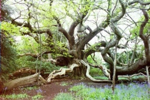 arthur tudor tree